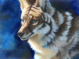 Striped Coyote by hibbary