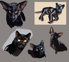Black fur studies