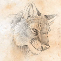 Cougar wolf by hibbary