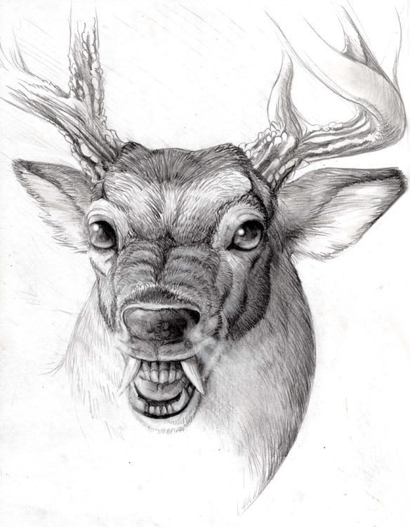 Swamp Buck by hibbaryDrawings Of Deer Bucks