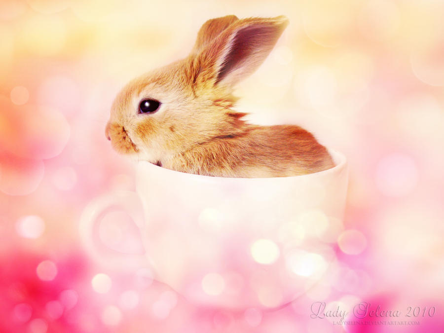 Teacup Bunny by Susaleena