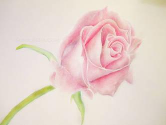 A Simple Rose by Susaleena