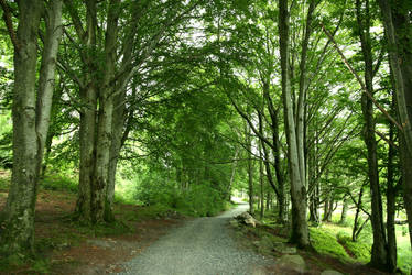Beech Forest Pathway