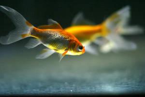 In memory of fish by Pharan