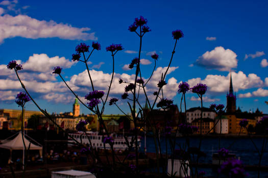 The Town and the Flower