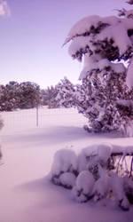 Snow around my home