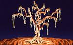 The tree of lava