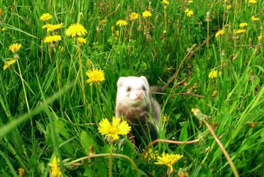 My ferret.