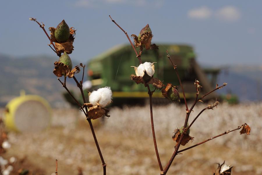 Cotton revolution by yori1976