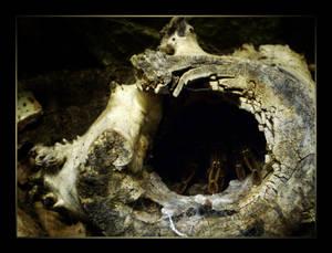The tarantulas' hive