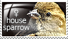 Stamp: female house sparrow by Jeshika-Haruno