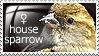Stamp: female house sparrow by Jeshika-Haruno