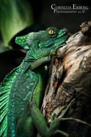 Lizard by Homunculi92