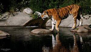 Tiger III by Homunculi92