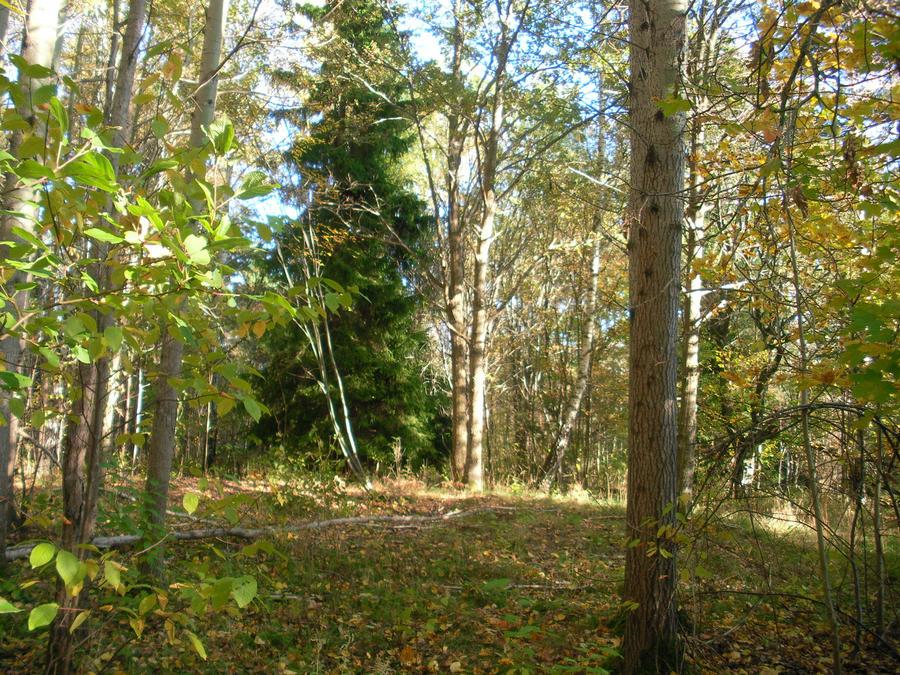 Autumn forest #10 by cleverlittleunicorn