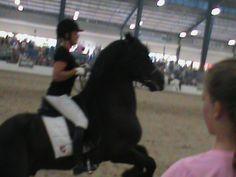 horses 9 at breyer fest 2013 by flickahorses