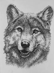 wolf by Concini