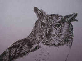 Eurasian eagle-owl WIP2 - 4h by Concini