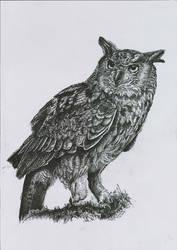 Eurasian eagle-owl / puchacz by Concini