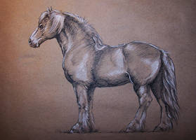 Draft horse practice by Concini