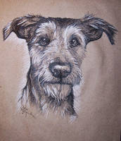 Foxterrier mix by Concini