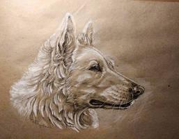 White swiss shepherd by Concini