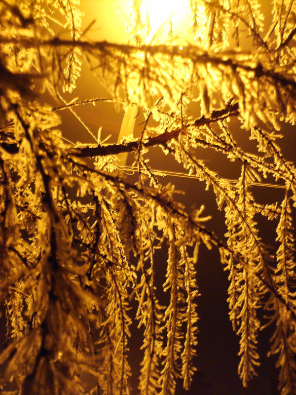 Larch in needles of ice by LadyWera