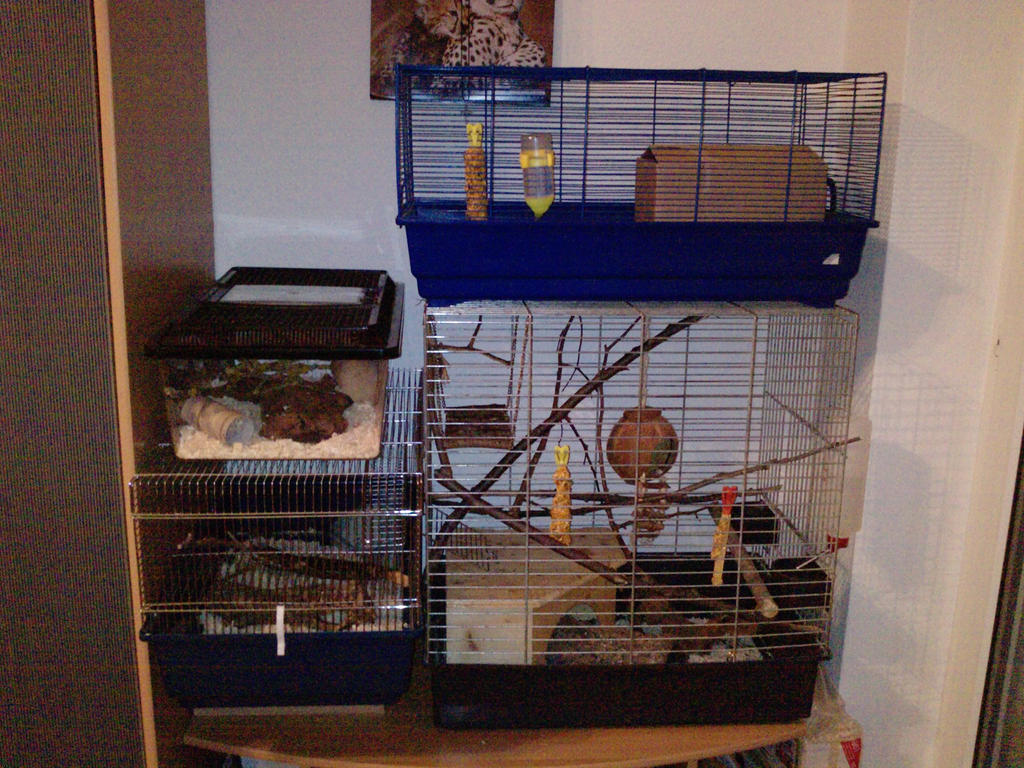 Cool mouse cage - photo#13