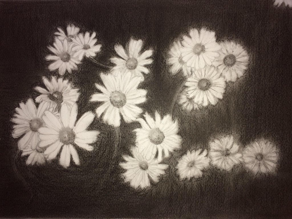 daisies in black and white by everswan on deviantart
