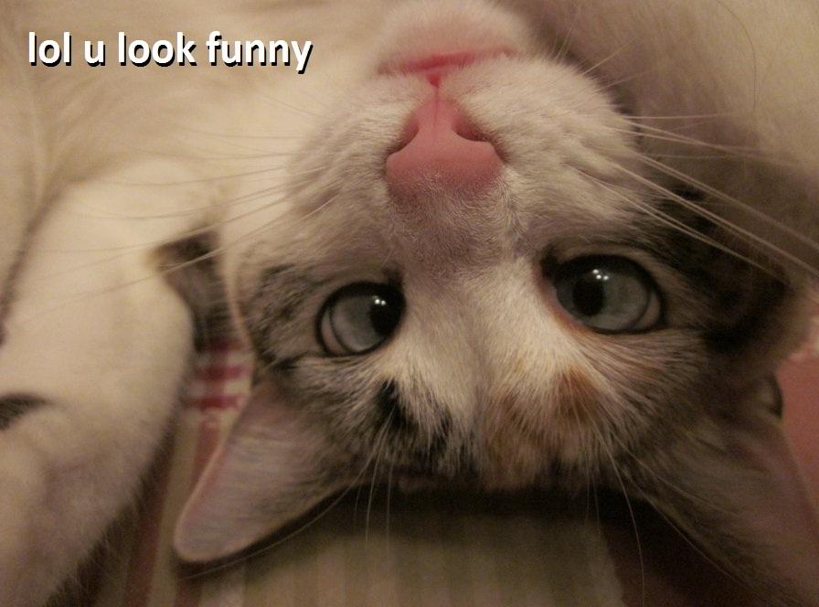 lol u look funny by nisaza