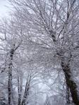 Snow by scarlette13