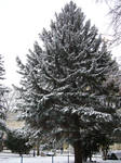 Winter tree by scarlette13