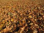 Leaves by scarlette13