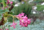 Blooming by scarlette13