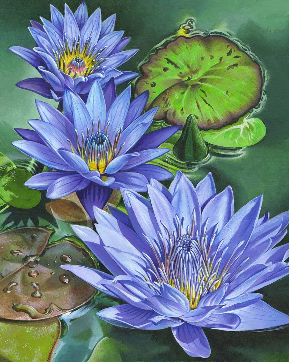 Three Waterlilies by doodlebat72
