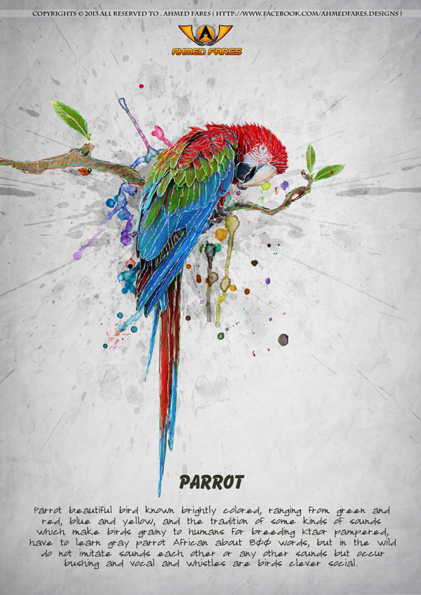 Parrot by Ahmed-Fares94