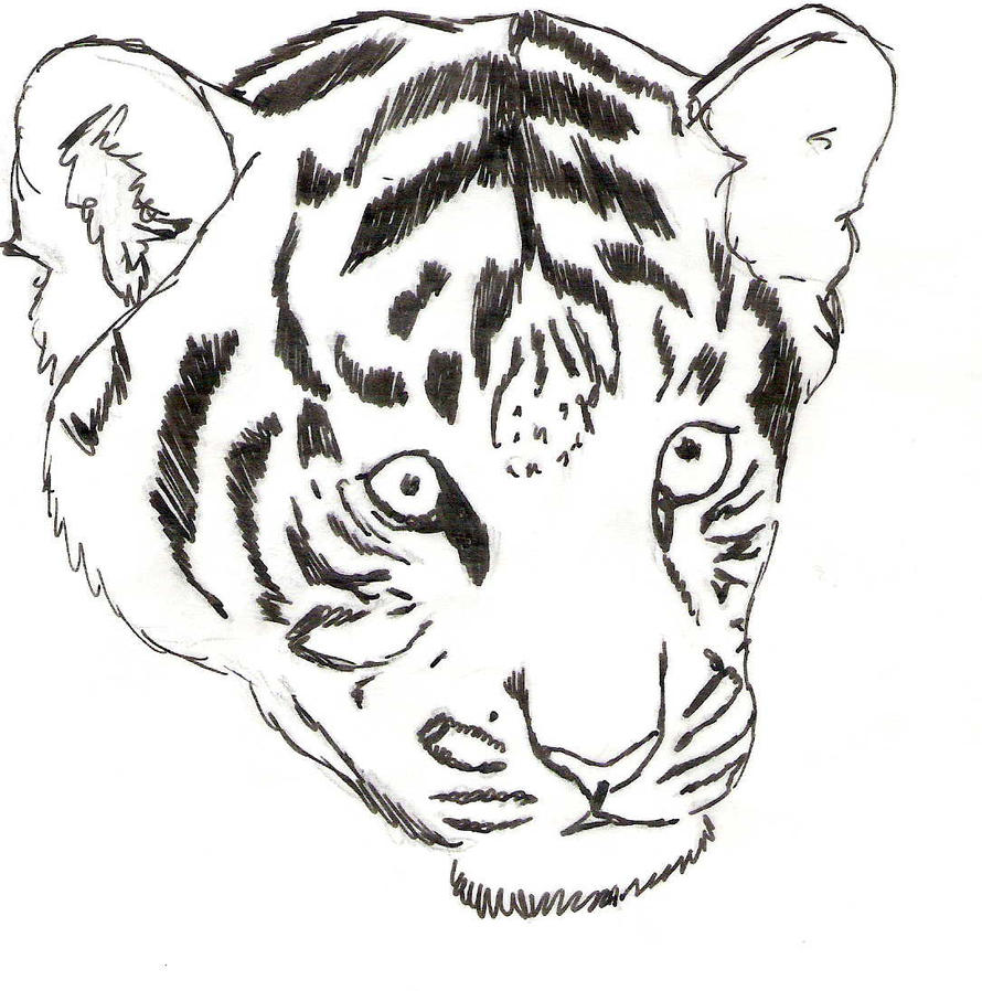 How to draw tiger cubs - 152.1KB