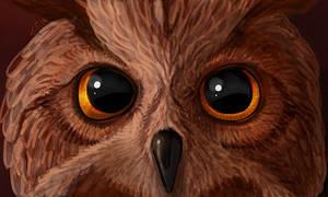 Fire Eyes by suzidragonlady