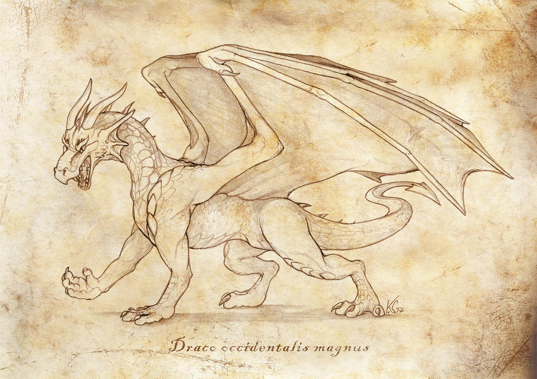 Draco occidentalis magnus by suzidragonlady