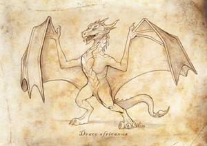 Draco africanus