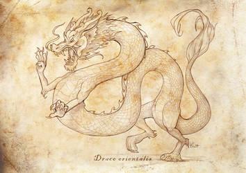 Draco orientalis by suzidragonlady