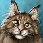 Maine Coon Kitty portrait