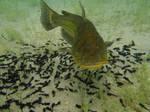 Catfish Stock
