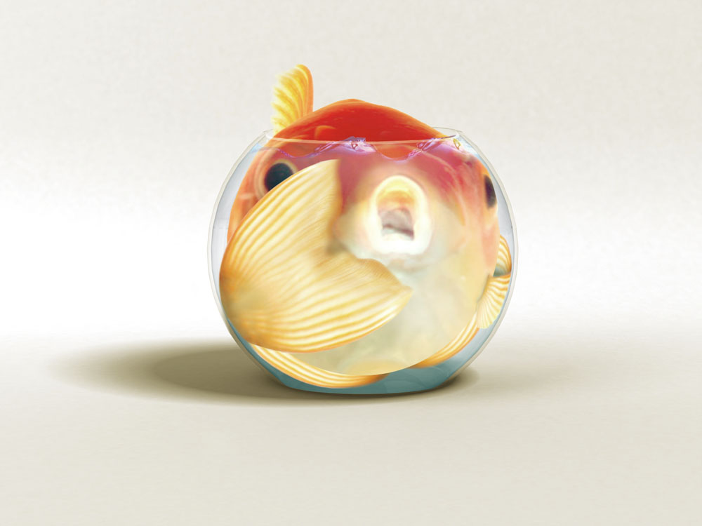 Intro i am y0fish random acts of amazon for What are fatty fish