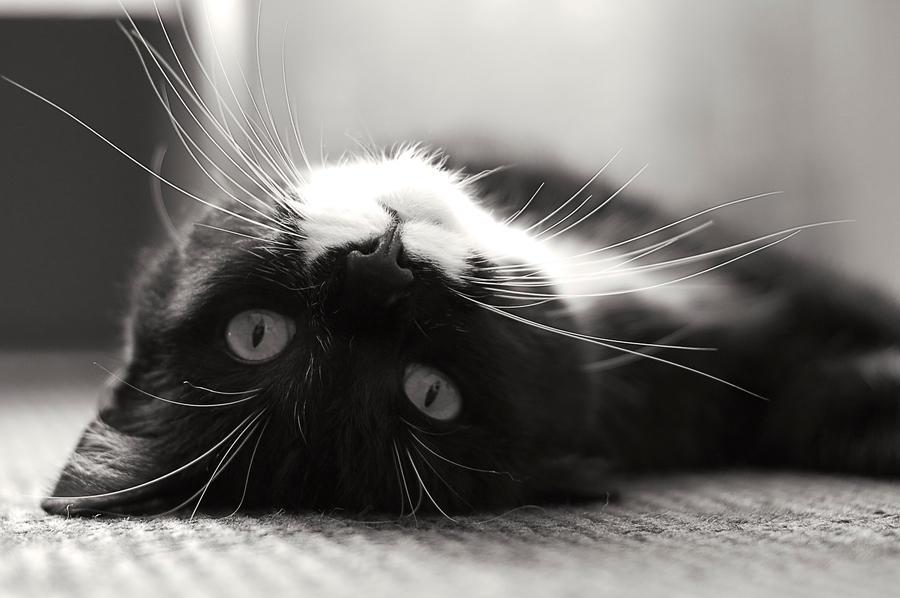 Cat in the sun by brokendalek
