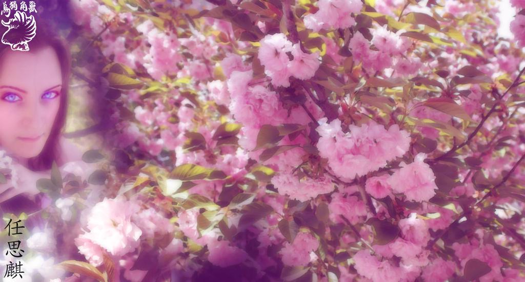 2013 Twitter Sakura BG by BlackUniGryphon