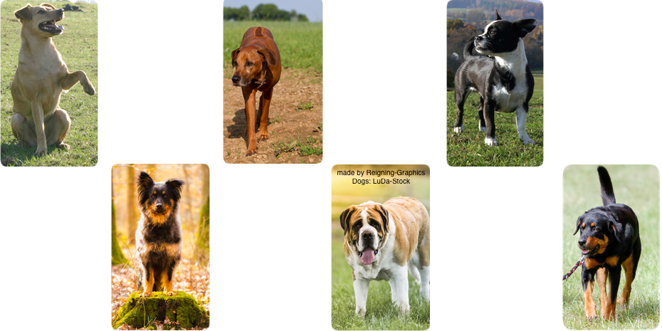 Dog layout by Reigning-Graphics