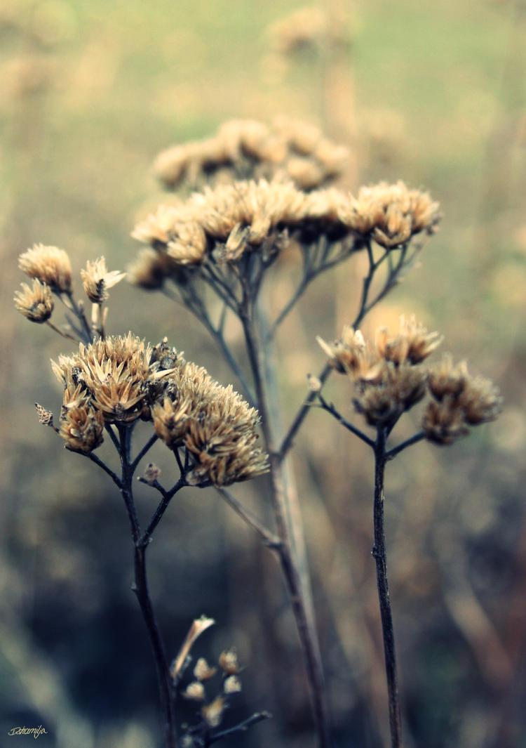Schaefchenblumen by DshaLie