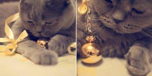 _catty cat