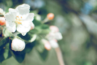 _softness by Lionicka